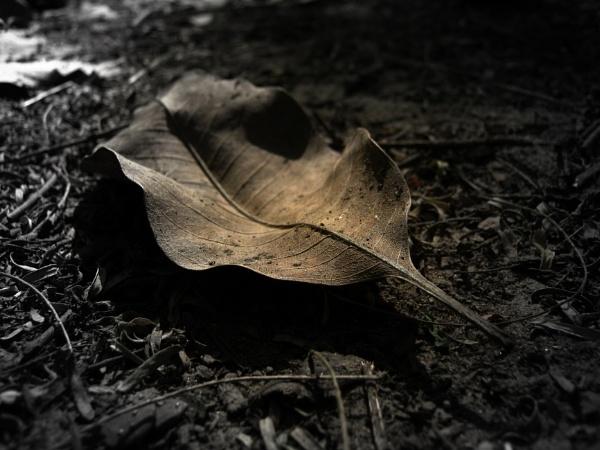 Dead leaf by bhavya