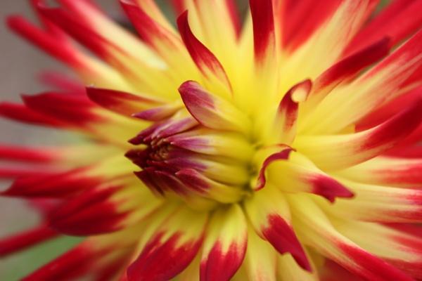 Petals of fire by KIWIGIRL78