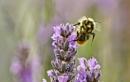 Busy Bee by WeeGeordieLass