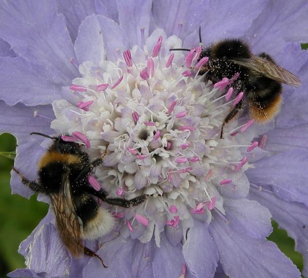 Nectar Feast