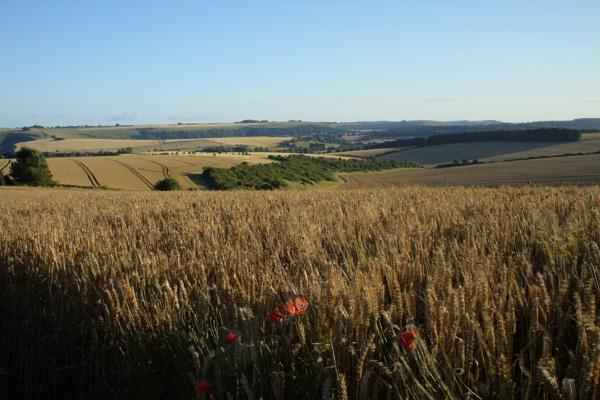 summer meadow by matthews677
