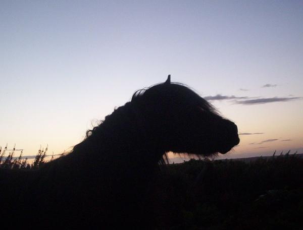 stallion at evening time by SCHEADU