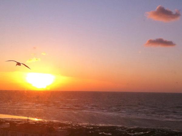 seagull at dawn by Hannah_Rushton