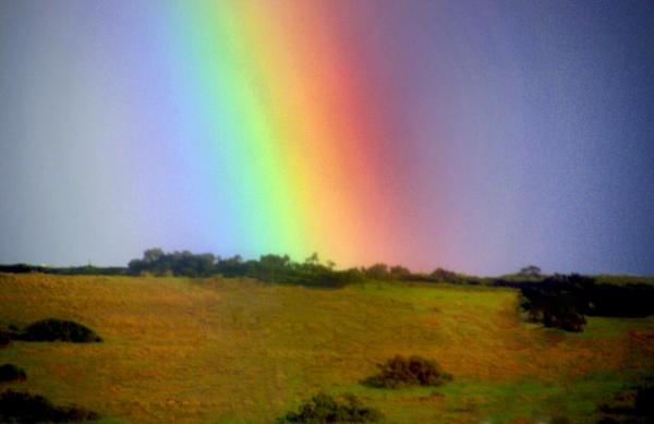 Rainbow by Emmab93