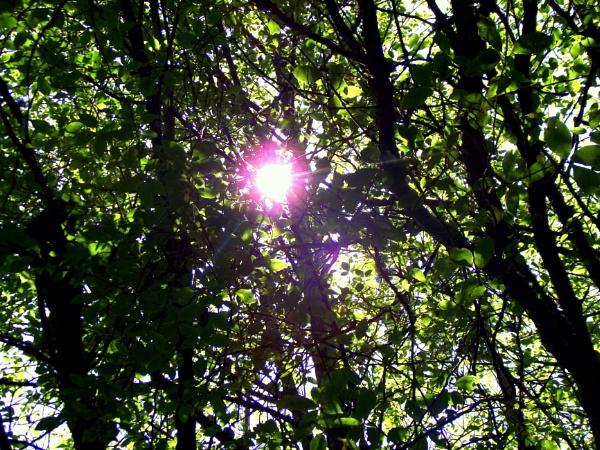 Sunshine by Emmab93