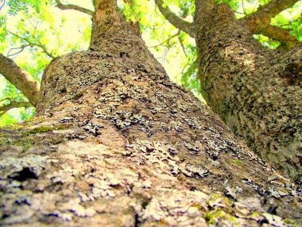 Tree Close Up by Emmab93