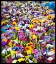 The Market Flower Stall