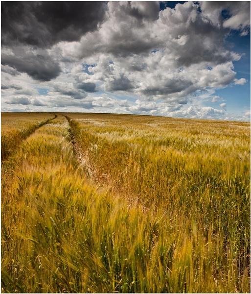 Golden Hillside... by Scottishlandscapes