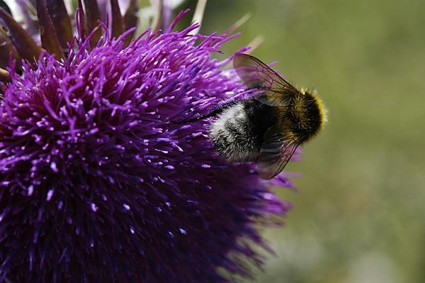 Bee by Minutefilm