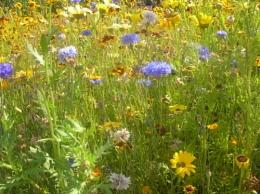 olympic park flowers