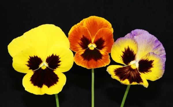 flowers by min