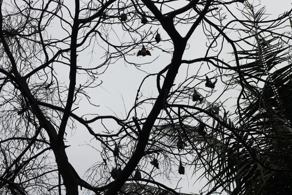 Bats by deepakthegeek