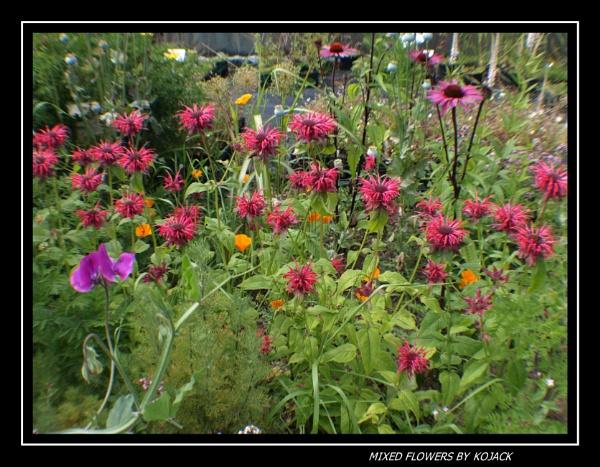MIXED FLOWERS by kojack