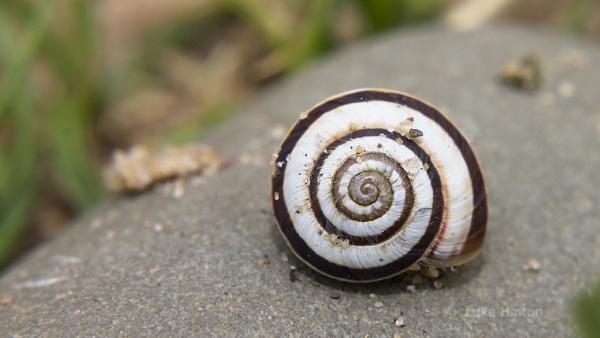 snail by Luk3