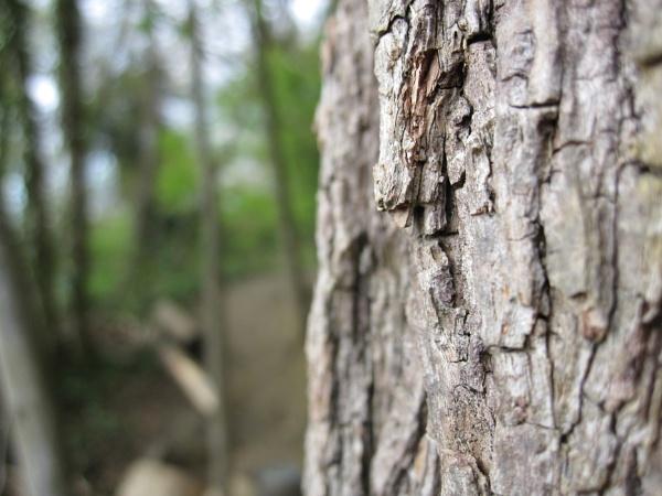 Tree Bark by Pinkreader55