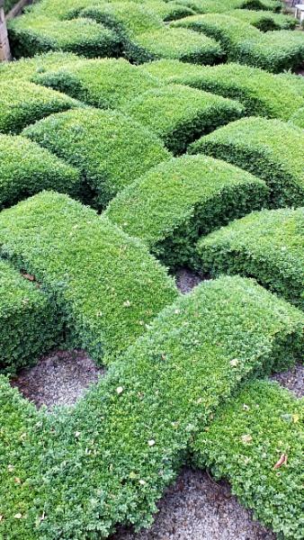 green lattice by kevlense