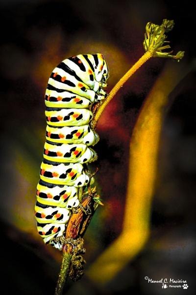 Larvae... by ManCorMac