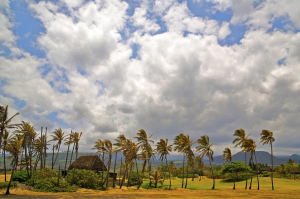 Hawaiian Vision by PhotographyBySuzan