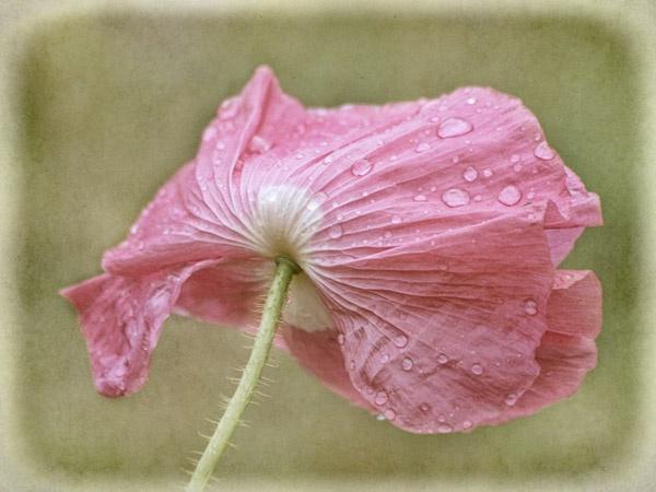 Wet & windswept by JenniCh