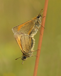 Coupled skippers