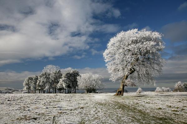 Frost on Minchinhampton common by JeffreyW