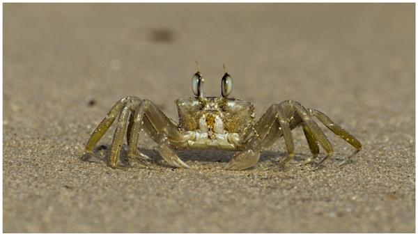 Crabin Klein by MrBMorris
