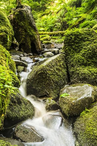 Woodland Stream by mollstar