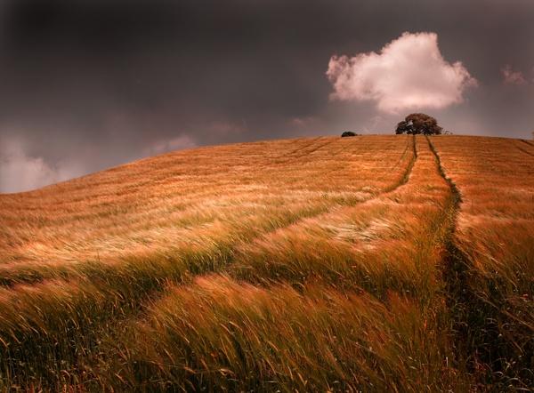 Windswept field by mookey