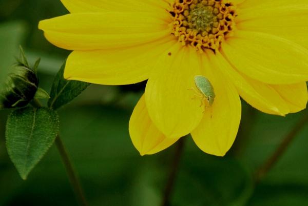 Bug on yellow... by Chinga