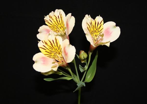petals by min