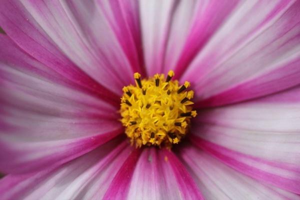 Flower by JadeClark