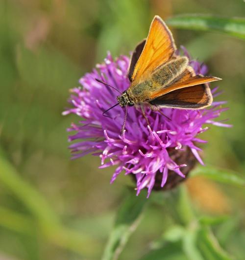 Moth on flower by Gillygems