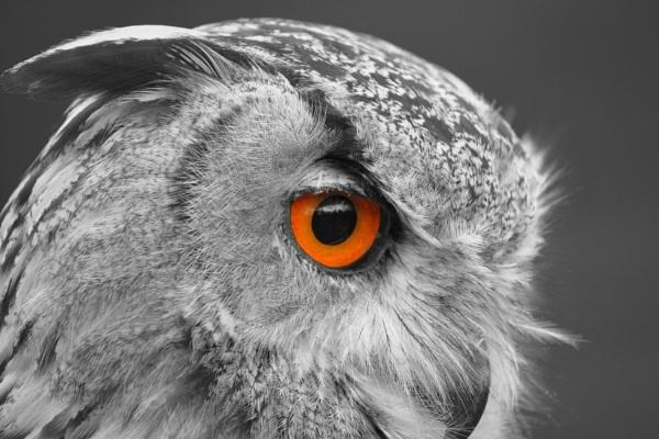 eagle eye by bertie1983