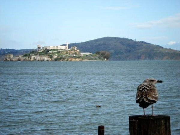 Alcatraz by Majorwatsisface