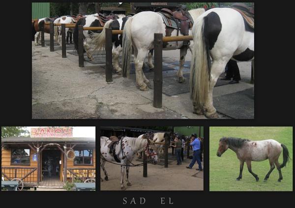 sad el by scottH