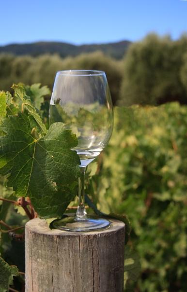 Wine glass by SueLeonard