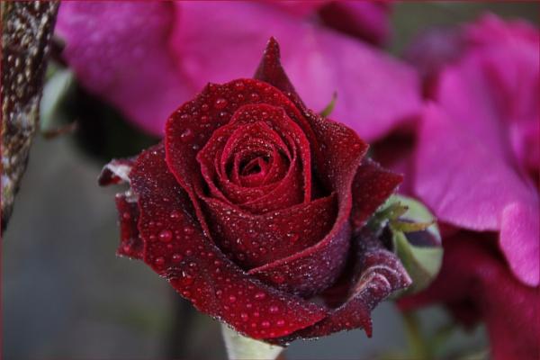 Macro Flowers by howdog
