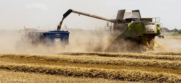 Gathering the Harvest by GordonLack