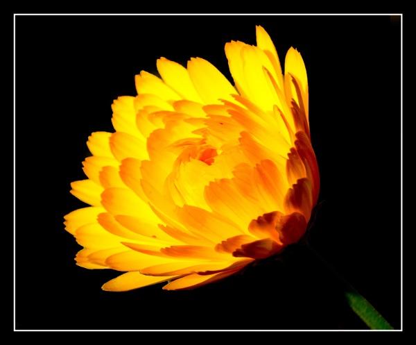 Sunshine Glow by Jodyw17