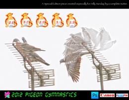 2012 Pigeon Gymnastics
