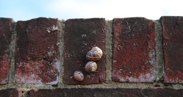 Olympic snail race by pdcche