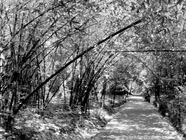Light of Shade by ARGHYASIKDAR