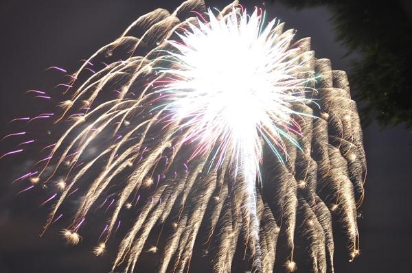 dandelion fireworks by sawa
