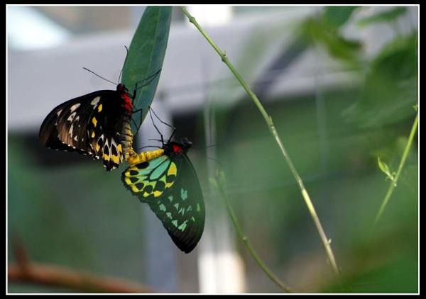 Beautiful Butterflies by JoDraper