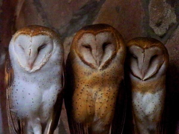 three wise men by blkwolf007