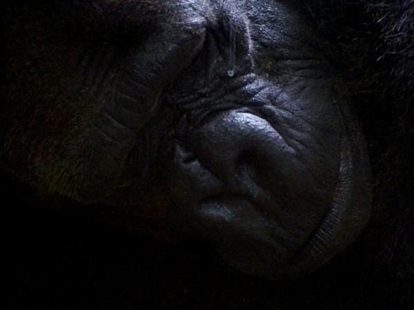 ssssshhhhh im sleeping by blkwolf007