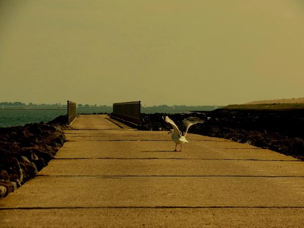 solitude by venus12