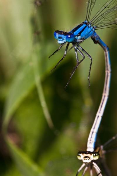 dragonfly by EwaG