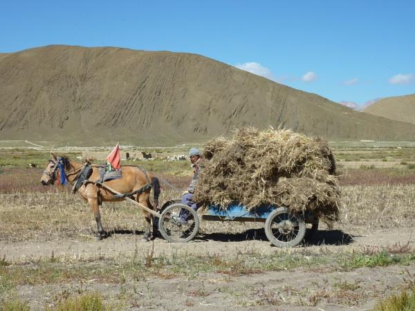 Rural farmer, Tibetan plateau by buntytw26