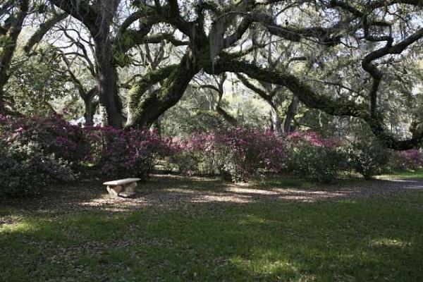 Eden Garden by Scottelly